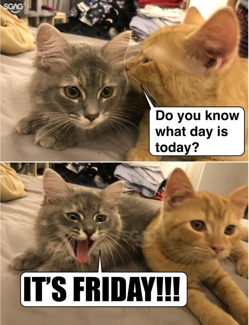 Tgif Cat Cute Cat 2018